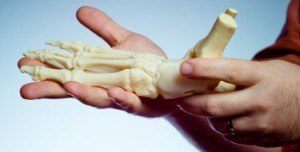 hand holding skeletal foot